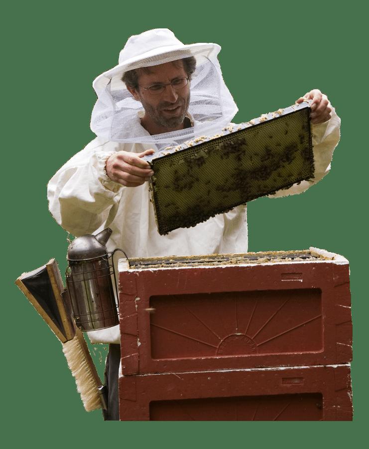 Biavler med honningtavle